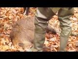 Охота на кабана у Ревы М. А.