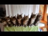 котята синхронно двигаются под музыку)))
