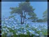Парк Хитачи Сисайд Hitachi Seaside Park в Японии Когда небо упало на землю музыка У моря у синего моря японский дуэт